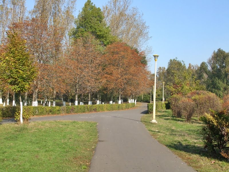 Alleys-in-Tabacarie-Park